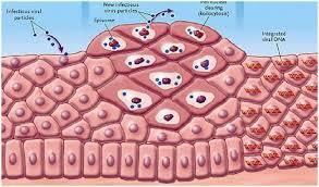 Фото: Папилломавирусная инфекция симптомы